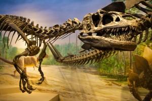 Allosaurus Burke Museum