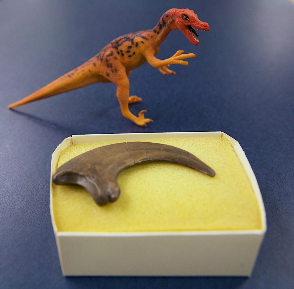 Velociraptor Claw