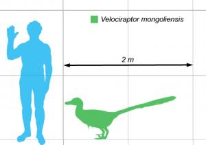 Velociraptor Scale