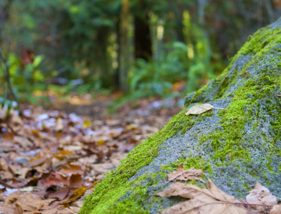 Scouting for Fairies Through Carkeek Park (Photos)