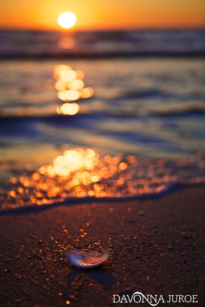 Seashell, beach, sunset, Florida